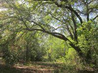 Home for sale: Lot 28m&28l Aucilla River Estate Rd., Lamont, FL 32336