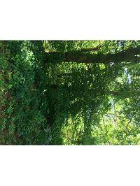Home for sale: 0 Deer Run, Charlestown, RI 02813