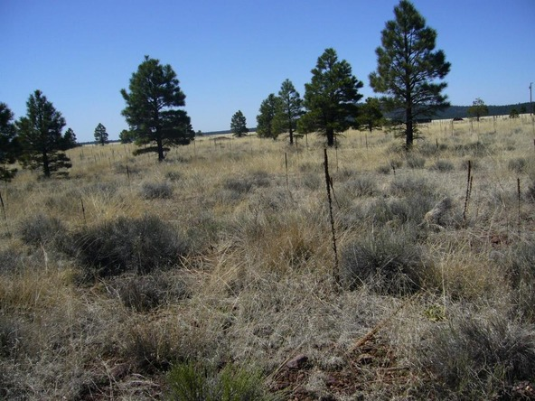 10558 E. White Horse Lake, Parks, AZ 86018 Photo 20