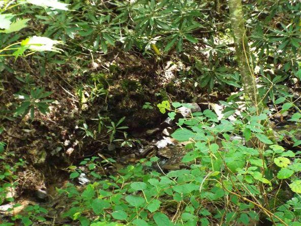 Lots 537 & 538 Deep Hollow Rd., Gatlinburg, TN 37738 Photo 30