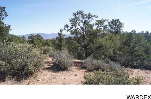 9999 N. Trap Springs Rd., Hackberry, AZ 86411 Photo 8