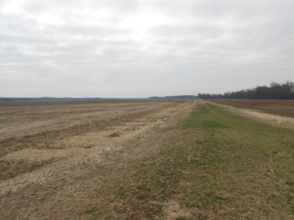402.93 Acres Long Creek, Waldenburg, AR 72475 Photo 4