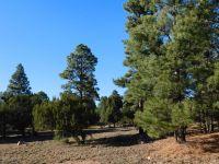 Home for sale: 2220 Meadow Trail, Overgaard, AZ 85933