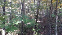 Home for sale: 0 Deer Run Rd., Altamont, TN 37301