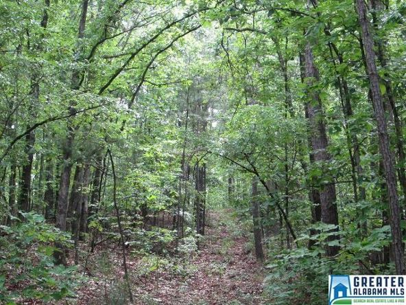 40 Acres Oaks Chapel Rd., Goodwater, AL 35072 Photo 11