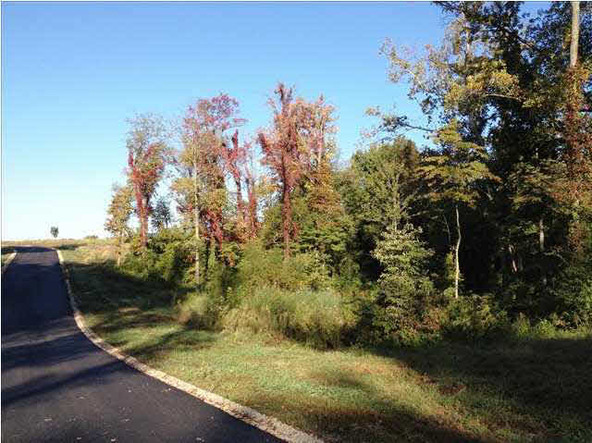 5980 Serenity Dr. Lot 5, Mount Vernon, IN 47620 Photo 32