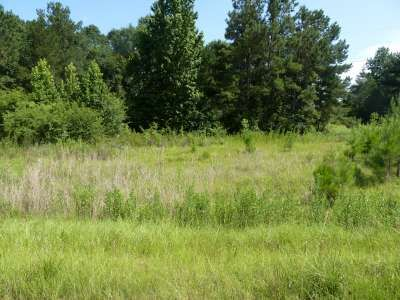 Cedar Ln. Lot#33, Summit, MS 39666 Photo 10