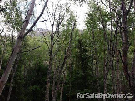 24343 Seward Hwy., Indian, AK 99540 Photo 39