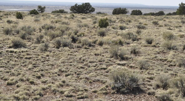 297 Woodridge Ranch, Concho, AZ 85924 Photo 21