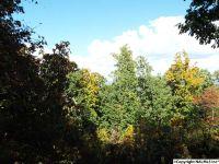 Home for sale: 11 S. County Rd. 89, Mentone, AL 35984