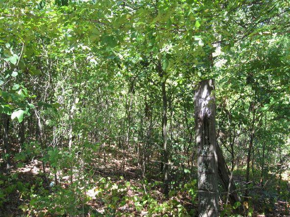 16.38 Acres Layer Ln., Harrisburg, AR 72432 Photo 2