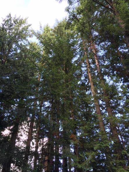 1 Thunder Peak Way, Bellingham, WA 98229 Photo 5