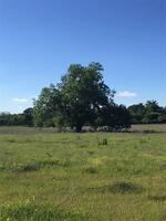 Home for sale: Tbd Hcr 1439, Covington, TX 76636