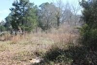 Home for sale: Lot 1 Nelle St., Panama City, FL 32404
