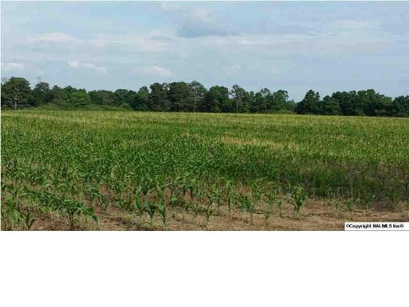 6 County Rd. 395, Section, AL 35771 Photo 1