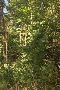 Home for sale: Tbd Brushy Mountain Rd., Marion, VA 24354