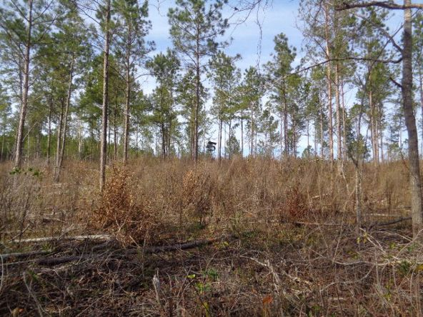 275+/-Ac Cty Rd. 46/Cty Rd 97, Abbeville, AL 36310 Photo 41