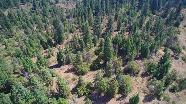 Lot 19 Forest Highlands, Boise, ID 83716 Photo 13