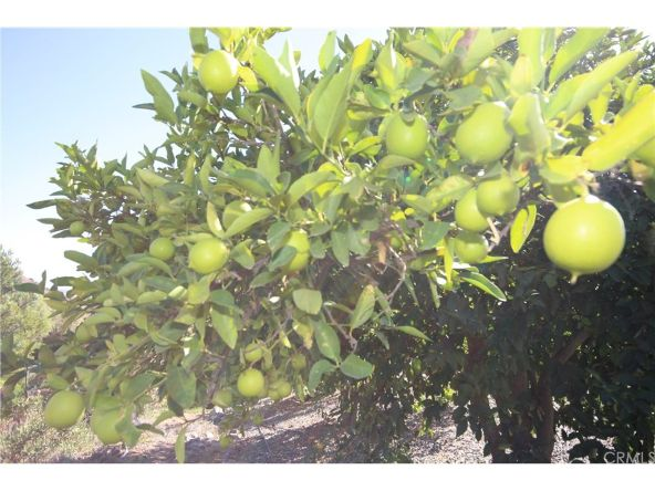 27015 Calle Escadera, Temecula, CA 92590 Photo 41