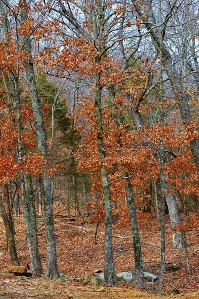 21187 Hale Mountain, Evansville, AR 72729 Photo 19