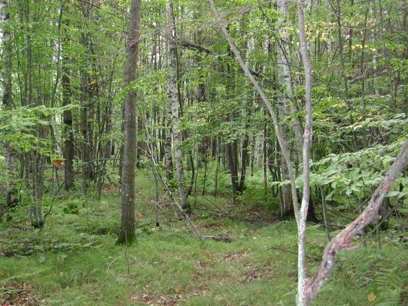 Out Lot 3 & 4 Pinery Rd., Hatley, WI 54440 Photo 3