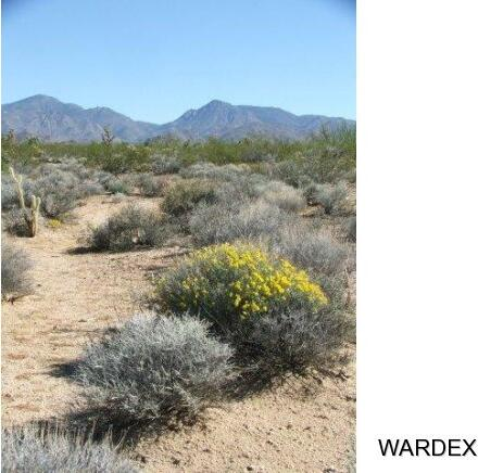 Parc 457 Shadow Ln., Yucca, AZ 86438 Photo 12