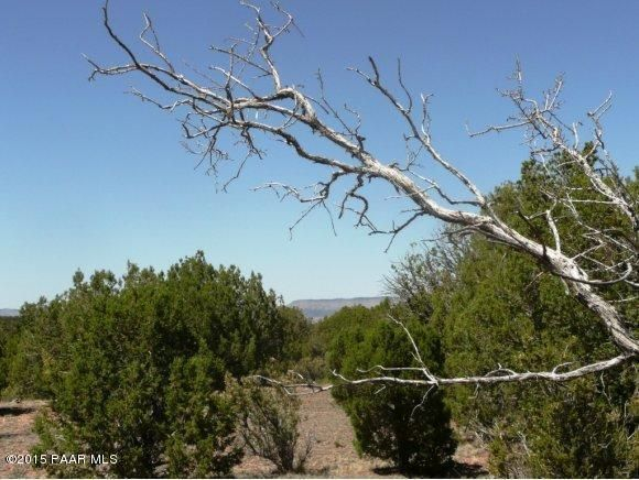 1024 Sierra Verde Ranch, Seligman, AZ 86337 Photo 25