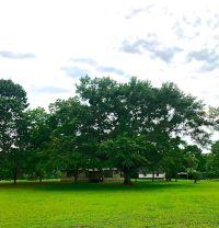 Home for sale: 1158 Mccoy, Cottonwood, AL 36320