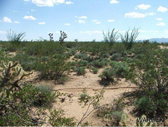 3181 Butch Cassidy Rd., Yucca, AZ 86438 Photo 24