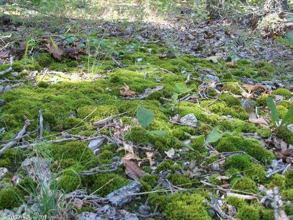 1 Cc Rd., Ravenden Springs, AR 72460 Photo 9