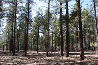 Home for sale: Mountain Shadows Ct., Tierra Amarilla, NM 87575