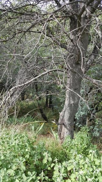 1043 E. Hyland Cir., Prescott, AZ 86303 Photo 18