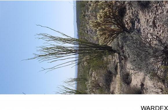 4332 W. Sunset Rd., Yucca, AZ 86438 Photo 50
