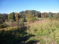 Home for sale: 999 Elys Branch, Owingsville, KY 40360