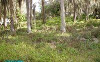 Home for sale: 1713 N. Ernest Rd., Avon Park, FL 33825