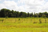 Home for sale: Lot 4 Meadow Ln., Fitzgerald, GA 31750