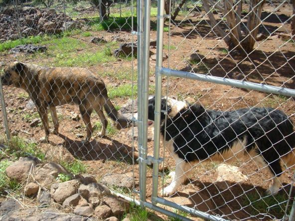 7944 Marken Ranch Rd., Show Low, AZ 85901 Photo 59