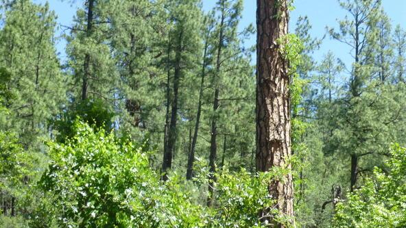 220 W. Zane Grey Cir., Christopher Creek, AZ 85541 Photo 35