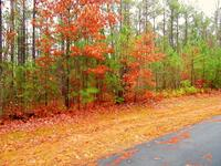 Home for sale: Lot 21 Loblolly Ln. S., Mill Spring, NC 28756