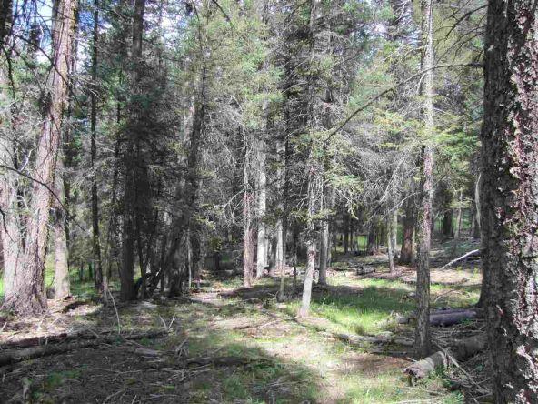 119 W. Pecos Canyon Estates Rd., Tererro, NM 87573 Photo 26