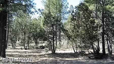 4288 Pioneer Ln., Lakeside, AZ 85929 Photo 5