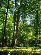 Home for sale: 00 Wandering Woods Ct., Beaver Island, MI 49782