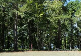 119 Cypress Royale W., Hemphill, TX 75948 Photo 5