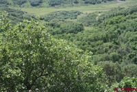 Home for sale: Tbd Cow Camp Trail, Dove Creek, CO 81324