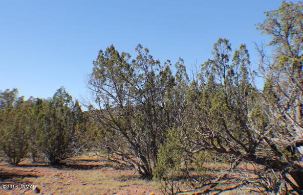 2 Acres Off Of Acr N. 3114, Vernon, AZ 85940 Photo 8