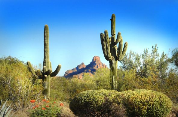 16265 E. Saguaro Blvd., Fountain Hills, AZ 85268 Photo 48