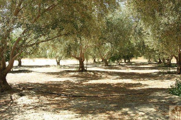 80865 Vista Bonita Trail, La Quinta, CA 92253 Photo 21